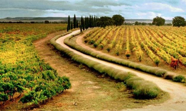 The world's biggest vineyard – Spanish wine