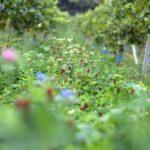 Etikett des Monats: Weingut Brand im August