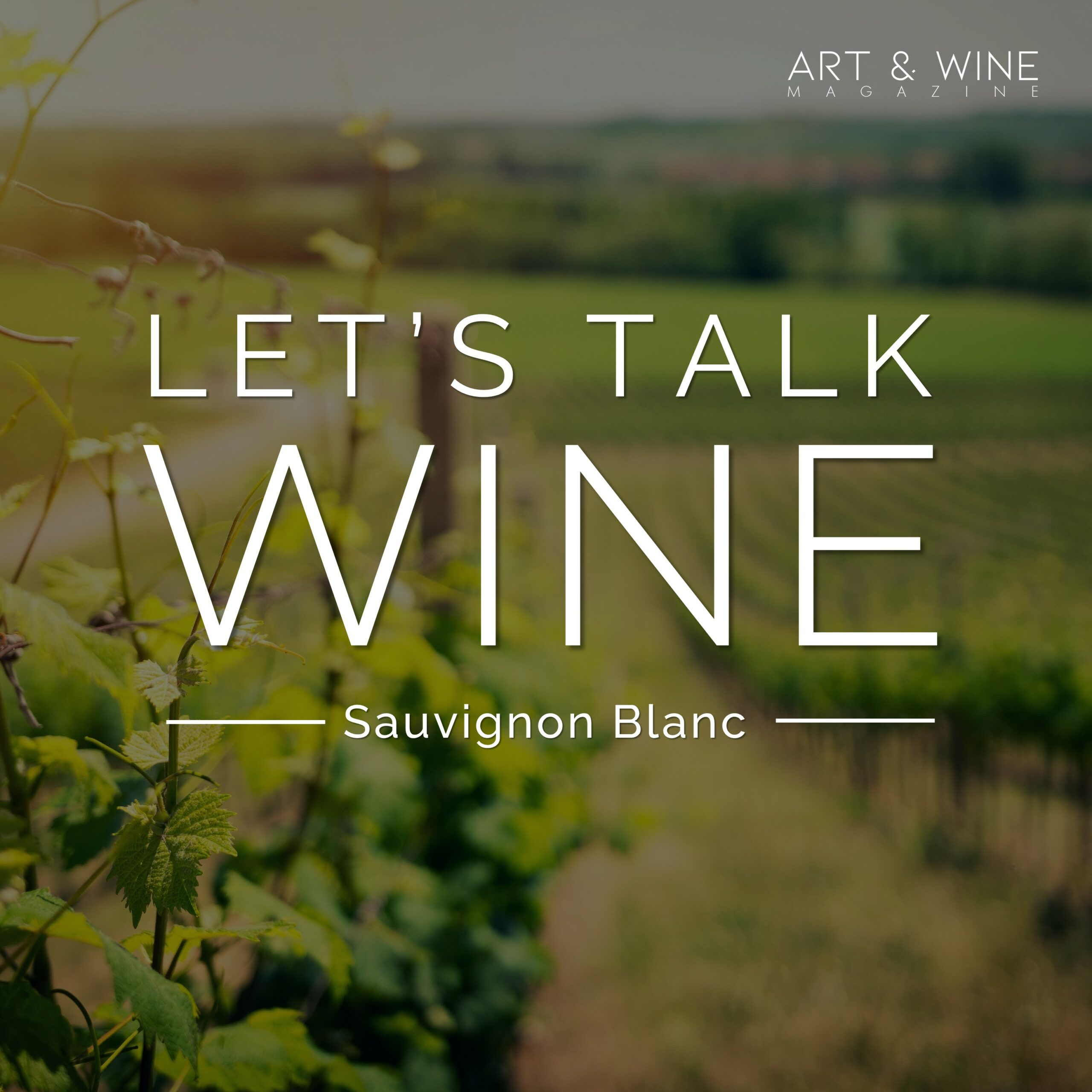 Let's talk wine Sauvignon Blanc Podcast