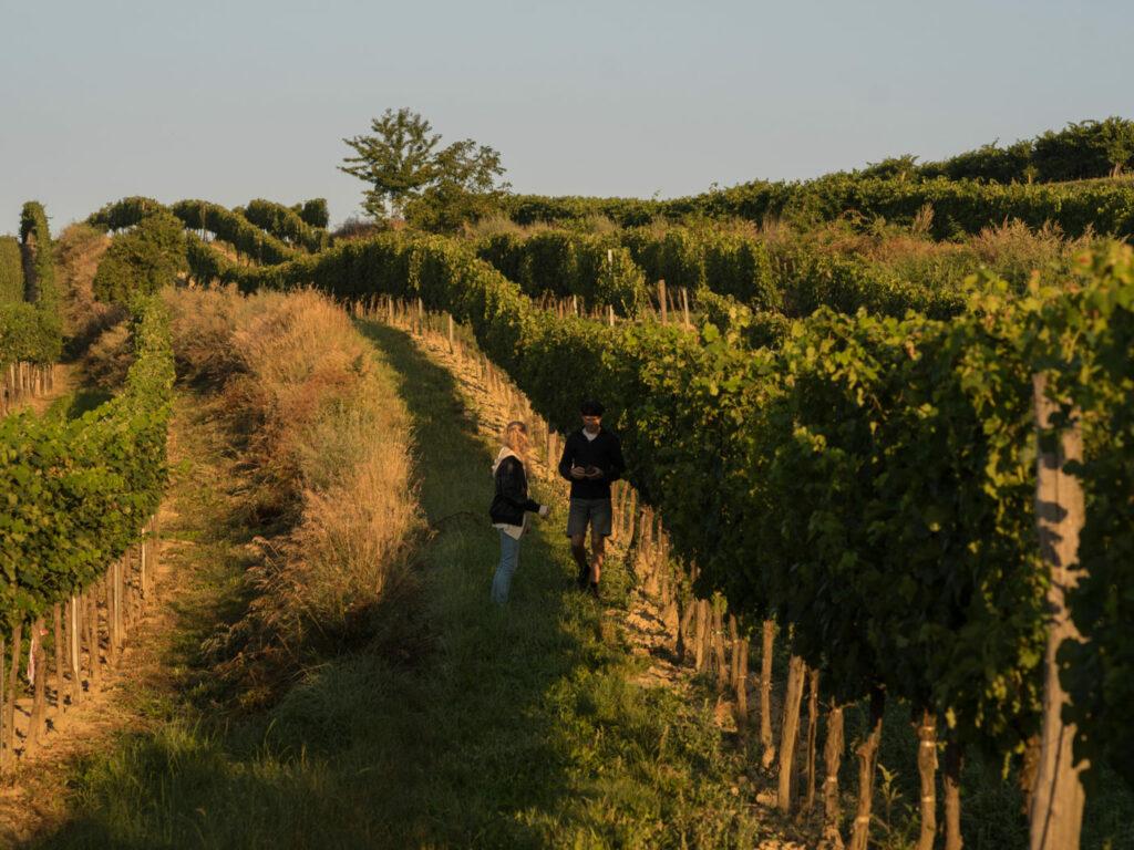 Weingut Fidesser in Platt
