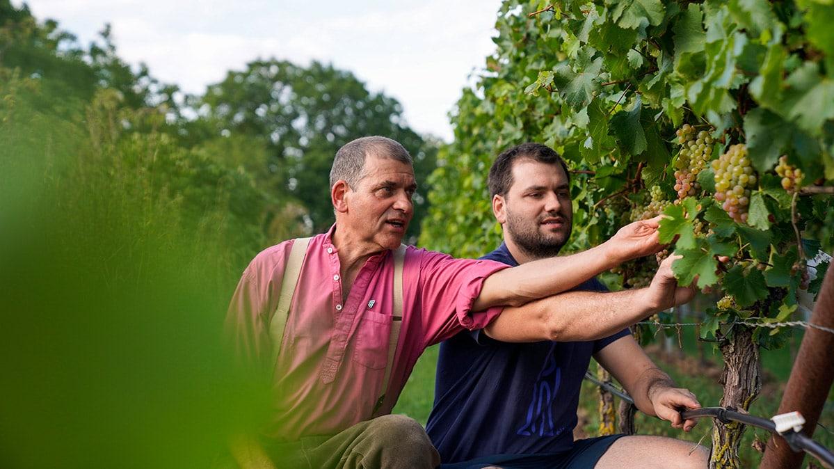 Klaus und Karl Rummel vor der Rebe im hauseignen Weinberg in der Pfalz